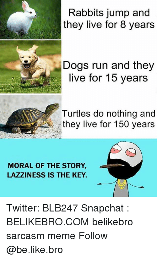 Be Like, Dogs, and Meme: Rabbits jump and  they live for 8 years  Dogs run and they  live for 15 years  Turtles do nothing and  they live for 150 years  MORAL OF THE STORY  LAZZINESS IS THE KEY Twitter: BLB247 Snapchat : BELIKEBRO.COM belikebro sarcasm meme Follow @be.like.bro