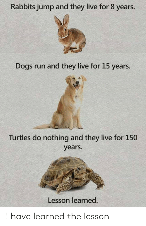 Dogs, Run, and Live: Rabbits jump and they live for 8 years.  Dogs run and they live for 15 years.  Turtles do nothing and they live for 150  years.  Lesson learned. I have learned the lesson