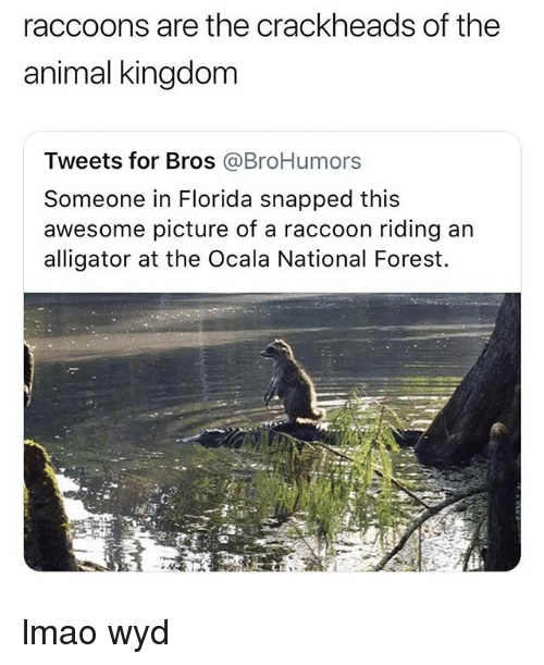 Lmao, Wyd, and Alligator: raccoons are the crackheads of the  animal kingdom  Tweets for Bros @BroHumors  Someone in Florida snapped this  awesome picture of a raccoon riding an  alligator at the Ocala National Forest. lmao wyd