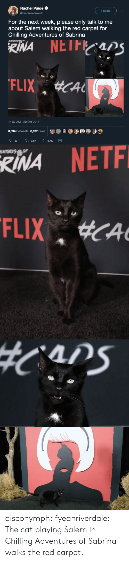 Gif, Target, and Tumblr: Rachel Paige  @rachmeetsworld  Follow  For the next week, please only talk to me  about Salem walking the red carpet for  Chilling Adventures of Sabrina  11:57 AM-20 Oct 2018  3,594 Retweets 8,677 Likes   RINA  NETF disconymph:  fyeahriverdale: The cat playing Salem in Chilling Adventures of Sabrina walks the red carpet.