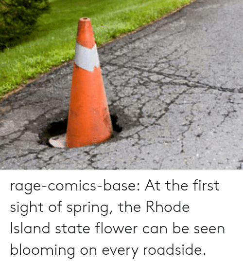 Tumblr, Blog, and Flower: rage-comics-base:  At the first sight of spring, the Rhode Island state flower can be seen blooming on every roadside.
