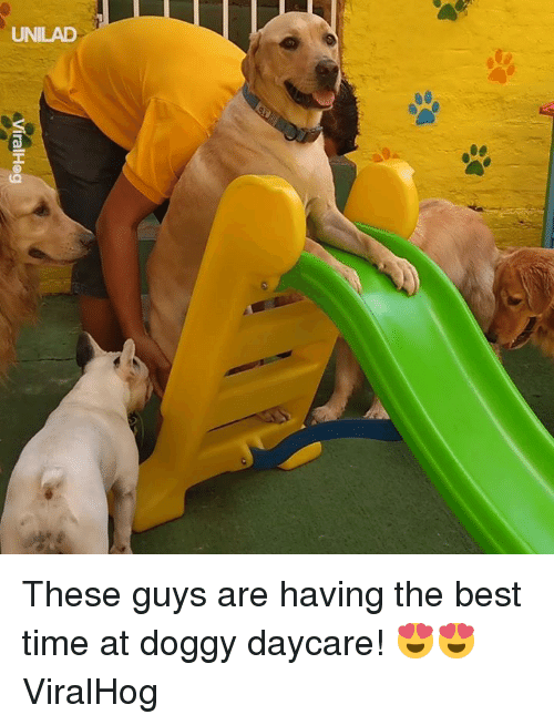Dank, Best, and Time: ralHog These guys are having the best time at doggy daycare! 😍😍  ViralHog