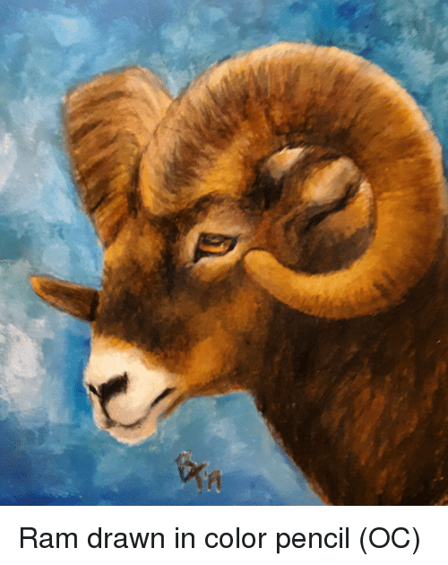 Ram, Color, and Drawn: Ram drawn in color pencil (OC)
