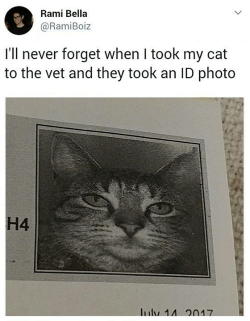 Memes, Never, and 🤖: Rami Bella  @RamiBoiz  I'll never forget when I took my cat  to the vet and they took an ID photo  H4  Iuly 14 20N17