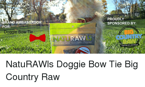 Memes, 🤖, and Big Country: RAND AMBASSADOR  FOR  Doggie Bow Tie  NAURAVV  PROUDLY  SPONSORED BY: NatuRAWls Doggie Bow Tie Big Country Raw