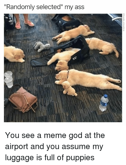 """Ass, Funny, and God: """"Randomly selected"""" my ass You see a meme god at the airport and you assume my luggage is full of puppies"""