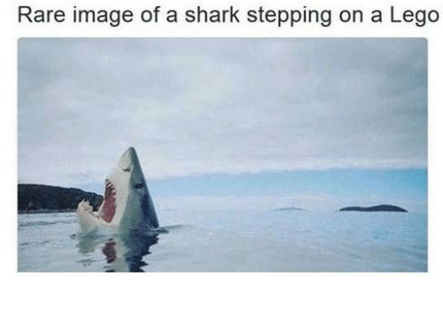 rare-image-of-a-shark-stepping-on-a-lego-4209424.png
