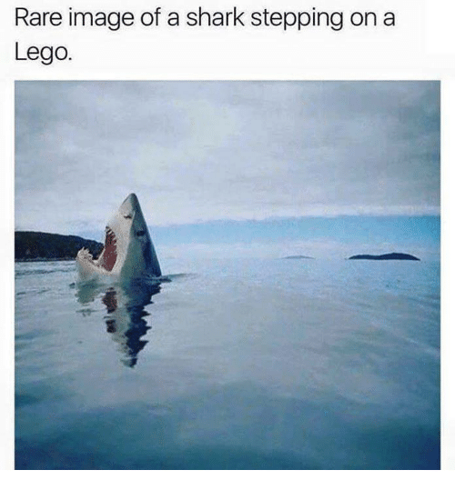 Lego Memes and Shark Rare image of a shark stepping on a Lego
