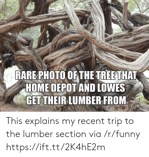 Funny, Home, and Home Depot: RARE PHOTO OF THE TREETHAT  HOME DEPOT AND LOWES  GET THEIRLUMBER FROM This explains my recent trip to the lumber section via /r/funny https://ift.tt/2K4hE2m
