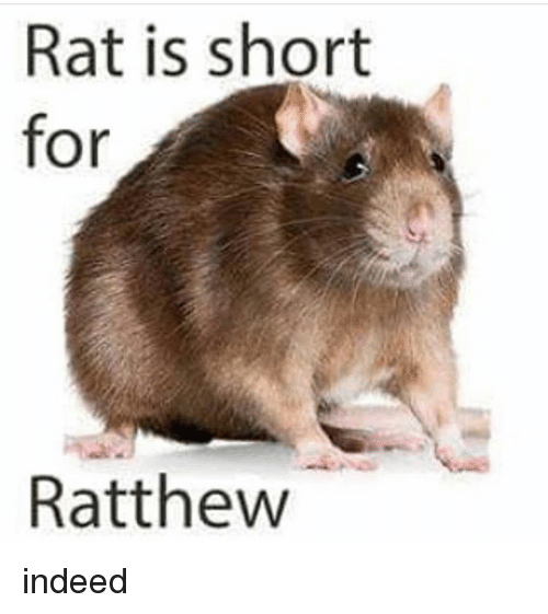 Indeed, Black Twitter, and Rat: Rat is short  for  Ratthew indeed
