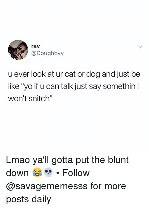 """Be Like, Lmao, and Memes: rav  @Doughbvy  u ever look at ur cat or dog and just be  like """"yo if u can talk just say somethin l  won't snitch"""" Lmao ya'll gotta put the blunt down 😂💀 • Follow @savagememesss for more posts daily"""