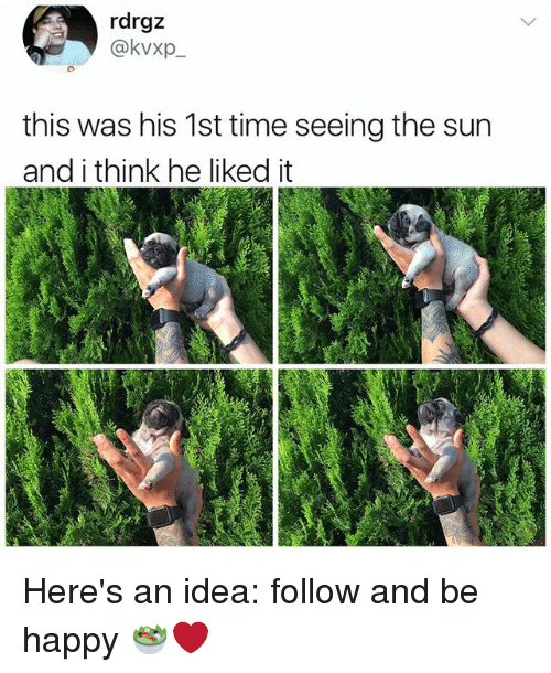 Memes, Happy, and Time: rdrgz  @kvxp  this was his 1st time seeing the sun  and i think he liked it Here's an idea: follow and be happy 🥗❤️