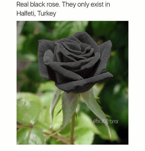 real black roses turkey images