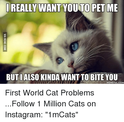 """Instagram, Memes, and Pets: REALLY WANT YOUTO PET ME  BUT I ALSO KINDA WANT TO BITE YOU  MEMEFUL COM First World Cat Problems    ...Follow 1 Million Cats on Instagram: """"1mCats"""""""