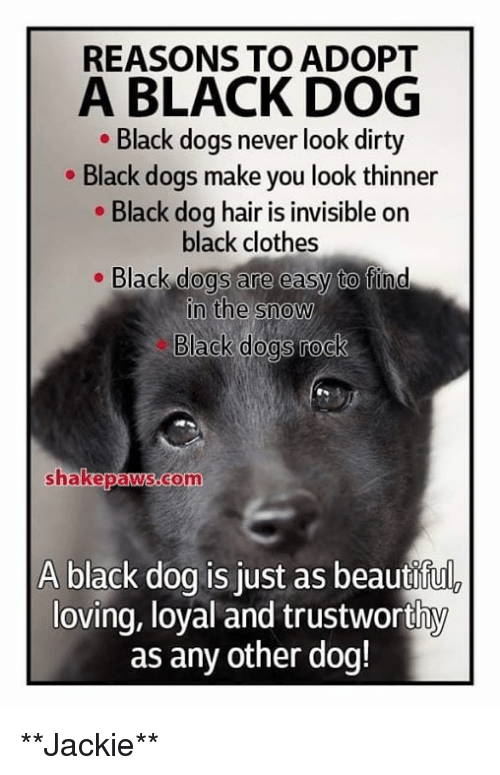 d0cf52f8 Clothes, Dogs, and Memes: REASONS TO ADOPT A BLACK DOG Black dogs never