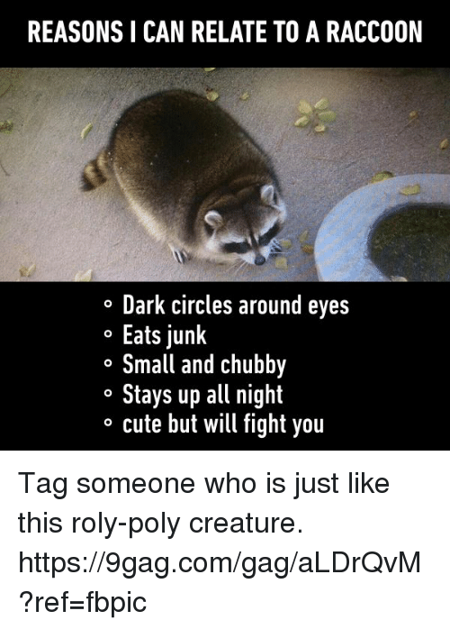 9gag, Cute, and Dank: REASONSICAN RELATE TO A RACCOON  o Dark circles around eyes  o Eats junk  o Small and Chubby  o Stays up all night  o cute but will fight you Tag someone who is just like this roly-poly creature. https://9gag.com/gag/aLDrQvM?ref=fbpic