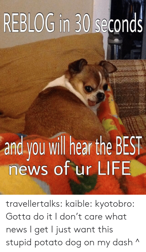 Life, News, and Tumblr: REBLOG in 30 seconds  and you wil hear the BEST  news of ur LIFE travellertalks: kaible:  kyotobro:  Gotta do it  I don't care what news I get I just want this stupid potato dog on my dash  ^