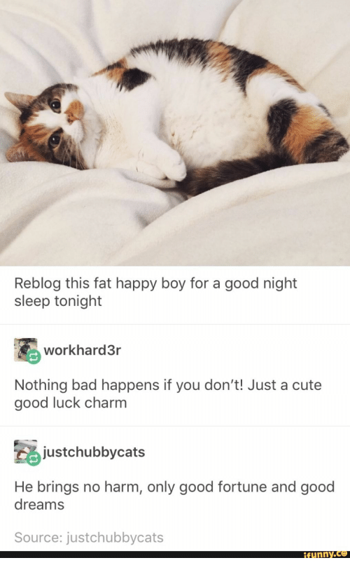 Bad, Cute, and Good: Reblog this fat happy boy for a good night  sleep tonight  workhard3r  Nothing bad happens if you don't! Just a cute  good luck charm  stchubbycats  He brings no harm, only good fortune and good  dreams  Source: justchubbycats  ifunny.Ce