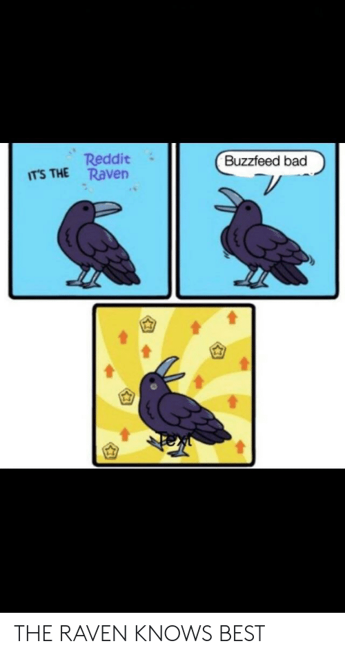 Reddit ITS THE Raven Buzzfeed Bad THE RAVEN KNOWS BEST | Bad Meme on
