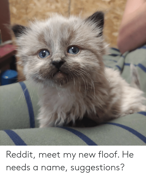 Reddit Meet My New Floof He Needs a Name Suggestions