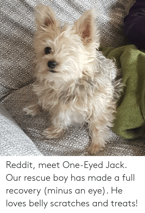 Reddit Meet One-Eyed Jack Our Rescue Boy Has Made a Full