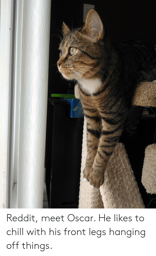 Chill, Reddit, and Oscar: Reddit, meet Oscar. He likes to chill with his front legs hanging off things.