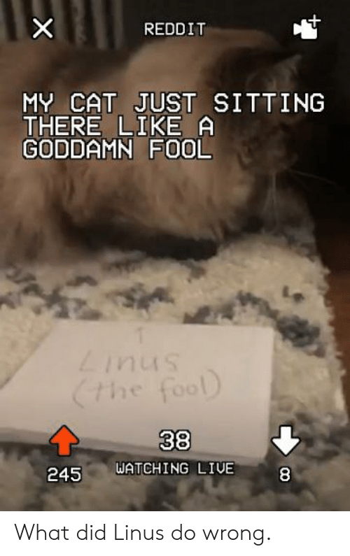 Reddit My Cat Just Sitting There Like A Goddamn Fool Snui7