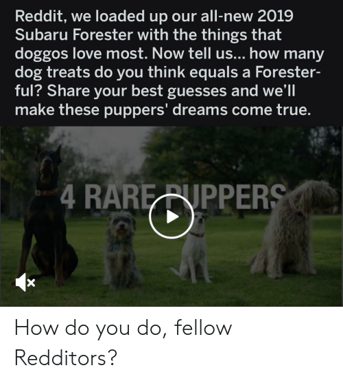 Love, Reddit, and True: Reddit, we loaded up our all-new 2019  Subaru Forester with the things that  doggos love most. Now tell us... how many  dog treats do you think equals a Forester-  ful? Share your best guesses and we'll  make these puppers' dreams come true.  4 RARE RNPPERS How do you do, fellow Redditors?