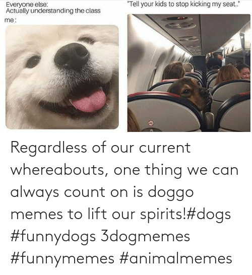 Dogs, Memes, and Doggo: Regardless of our current whereabouts, one thing we can always count on is doggo memes to lift our spirits!#dogs #funnydogs 3dogmemes #funnymemes #animalmemes
