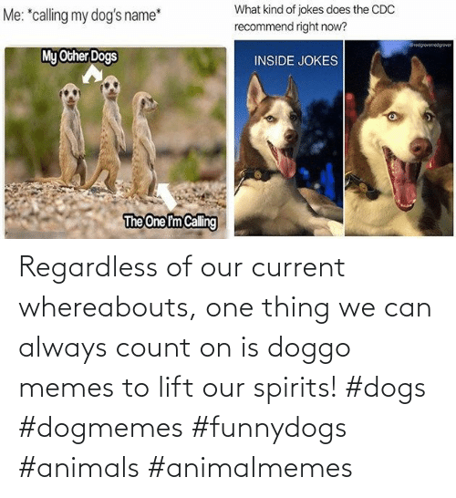 Animals, Dogs, and Memes: Regardless of our current whereabouts, one thing we can always count on is doggo memes to lift our spirits! #dogs #dogmemes #funnydogs #animals #animalmemes