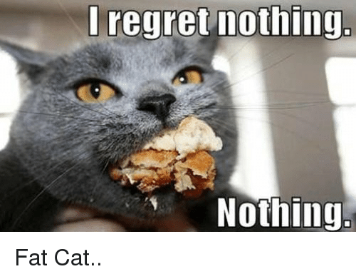 Cats, Fat, and LOLcats: regret nothing.  Nothing Fat Cat..