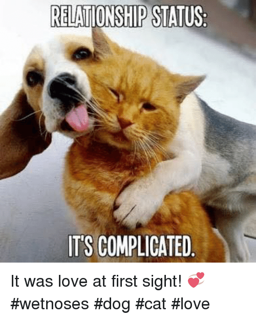 cat and dog relationship love meme