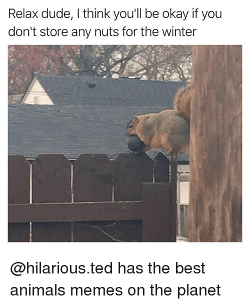 Animals, Dude, and Funny: Relax dude, I think you'll be okay if you  don't store any nuts for the winter @hilarious.ted has the best animals memes on the planet