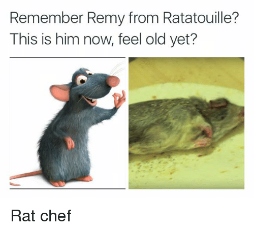 Remember Remy From Ratatouille This Is Him Now Feel Old Yet Rat Chef Ratatouille Meme On Me Me
