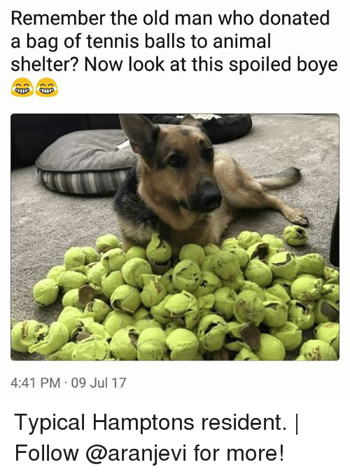 Memes, Old Man, and Animal: Remember the old man who donated  a bag of tennis balls to animal  shelter? Now look at this spoiled boye  4:41 PM 09 Jul 17 Typical Hamptons resident. | Follow @aranjevi for more!