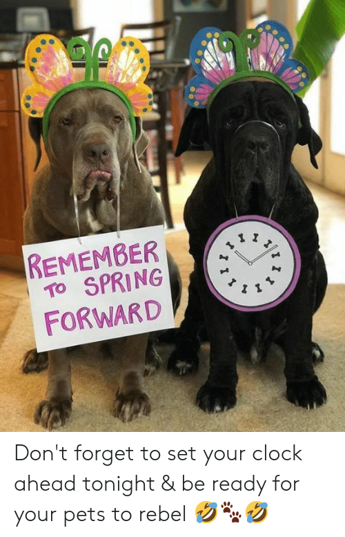 Clock, Memes, and Pets: REMEMBER  TO SPRING  FORWARD Don't forget to set your clock ahead tonight & be ready for your pets to rebel 🤣🐾🤣
