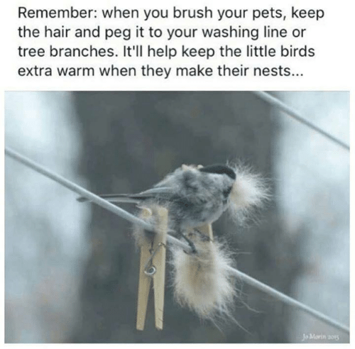 Memes, Birds, and Pets: Remember: when you brush your pets, keep  the hair and peg it to your washing line or  tree branches. It'll help keep the little birds  extra warm when they make their nests...  Jo Morin 201