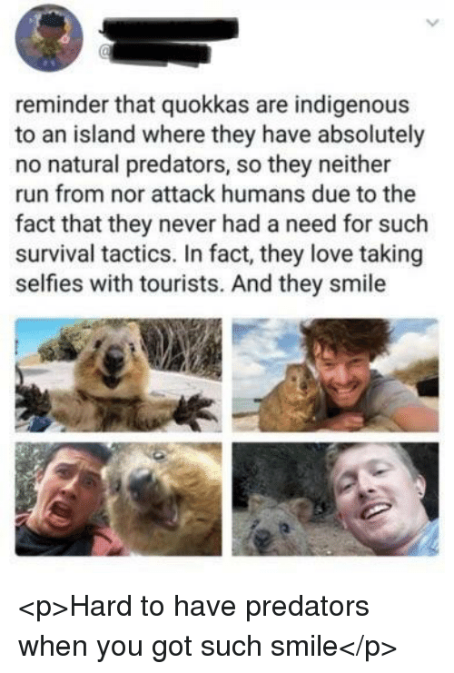 Love, Run, and Smile: reminder that quokkas are indigenous  to an island where they have absolutely  no natural predators, so they neither  run from nor attack humans due to the  fact that they never had a need for such  survival tactics. In fact, they love taking  selfies with tourists. And they smile <p>Hard to have predators when you got such smile</p>