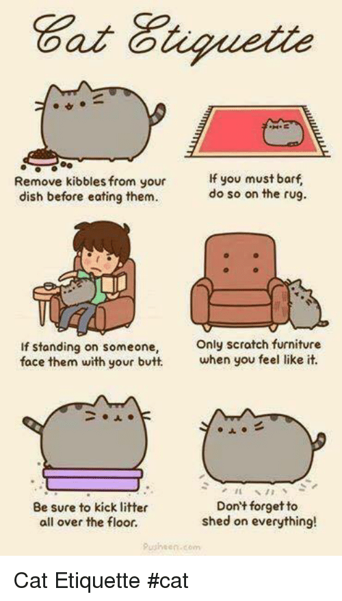 Butt, Memes, and Dish: Remove kibbles from your  f you must barf  do so on the rug.  dish before eating them.  If standing on someone,  Only scratch furniture  when you feel like it.  face them with your butt.  Don't forget to  Be sure to kick litter  shed on everything!  all over the floor.  Pusheen.com Cat Etiquette                  #cat