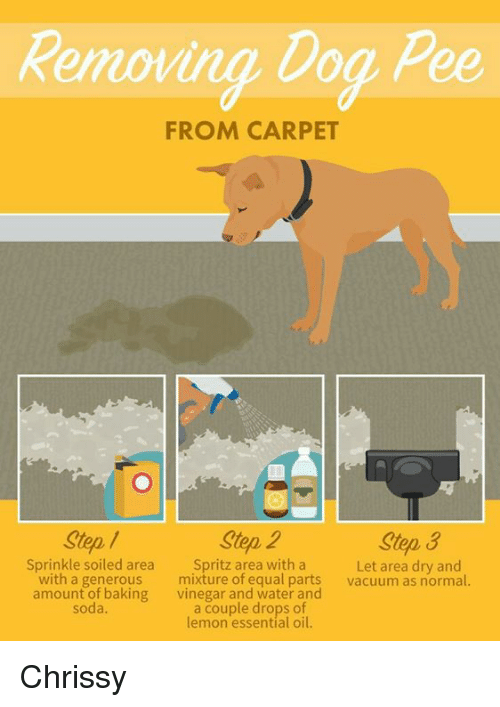 Memes Soda And Vacuum Removing Dog From Carpet Step 2
