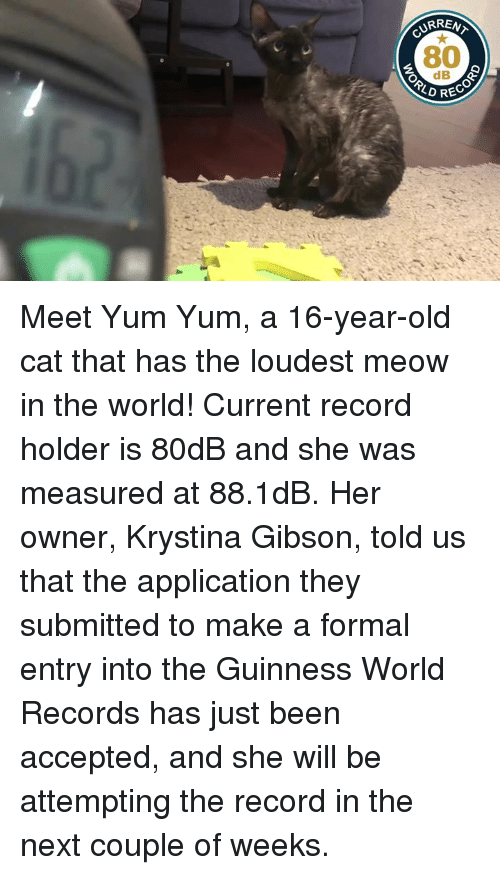 Record, World, and Old: RENT  CURRA  80  dB  RECO Meet Yum Yum, a 16-year-old cat that has the loudest meow in the world!   Current record holder is 80dB and she was measured at 88.1dB.   Her owner, Krystina Gibson, told us that the application they submitted to make a formal entry into the Guinness World Records has just been accepted, and she will be attempting the record in the next couple of weeks.