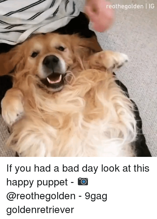 9gag, Bad, and Bad Day: reothegolden | IG If you had a bad day look at this happy puppet - 📷@reothegolden - 9gag goldenretriever