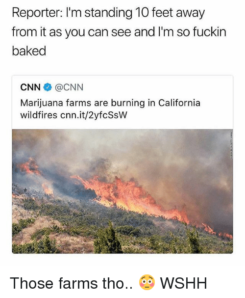 Baked, cnn.com, and Memes: Reporter: I'm standing 10 feet away  from it as you can see and I'm so fuckin  baked  CNN@CNN  Marijuana farms are burning in California  wildfires cnn.it/2yfcSsW Those farms tho.. 😳 WSHH