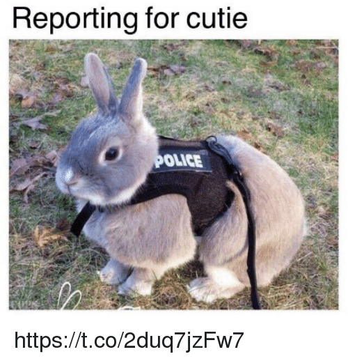 Memes, 🤖, and For: Reporting for cutie  OLICE https://t.co/2duq7jzFw7