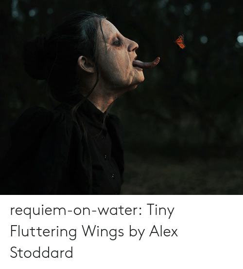 Tumblr, Blog, and Http: requiem-on-water:    Tiny Fluttering Wings by  Alex Stoddard