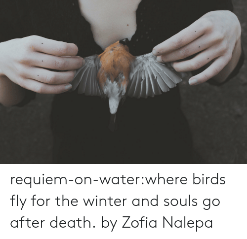 Tumblr, Winter, and Birds: requiem-on-water:where birds fly for the winter and souls go after death.by Zofia Nalepa