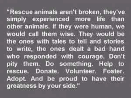 34972bf1f897a rescue-animals-arent-broken-theyve-simply-experienced-more-life-than-35910840.png