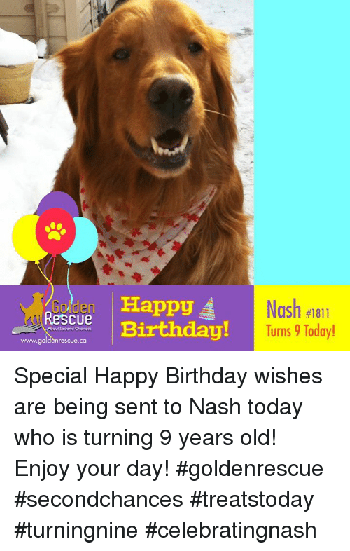 Birthday Memes And Happy Rescue A Nash 1811