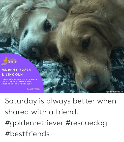 Rescue MURPHY #2724 & LINCOLN TRUE FRIENDSHIP COMES WHEN THE SILENCE