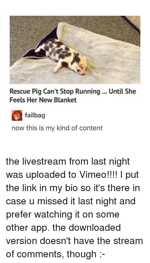 Ironic, Link, and Content: Rescue Pig Can't Stop Running .. Until She  Feels Her New Blanket  failbag  now this is my kind of content the livestream from last night was uploaded to Vimeo!!!! I put the link in my bio so it's there in case u missed it last night and prefer watching it on some other app. the downloaded version doesn't have the stream of comments, though :-